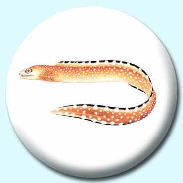25mm Eel Button...
