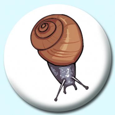 25mm Garden Snail...