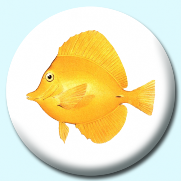 38mm Yellow Tang...